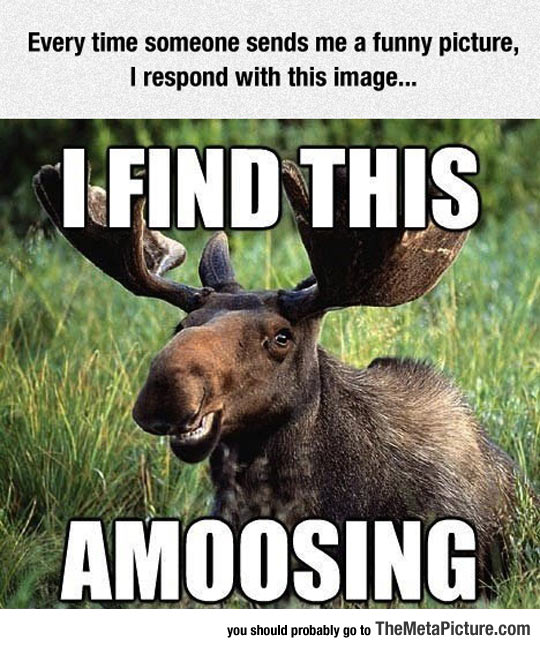 cool-moose-smile-forest