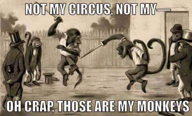 mymonkeys