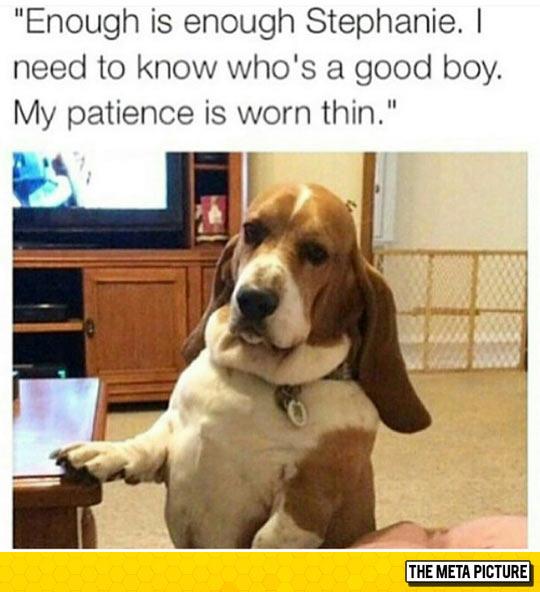 funny-dog-big-ears-table-living-room